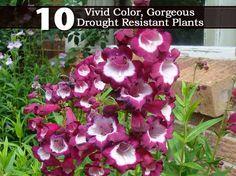 gorgeous drought, landscap, 10droughtcolor plant, vivid color, colors, resist plant, drought resist, native plants, garden