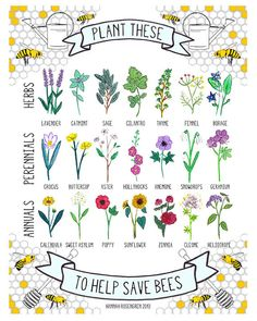Plant These to Help Save Bees Print