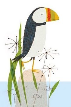 bird, anim, charact, ilustracion, hindley puffin