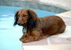 Pool Pricer article on semi-inground pool decks >> http://www.poolpricer.com/semi-inground-pools-with-decks/