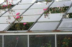 Abandoned, overgrown greenhouse in Philadelphia.