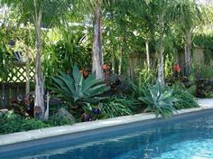 """Keep plants low and layered around the pool for greatest impact -- and be sure to choose varieties that don't """"shed"""" constantly, or you'll spend your days picking up leaves."""