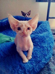 Kitty photo bomb lol