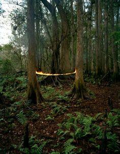 Adam Ekberg, Fire Two Trees