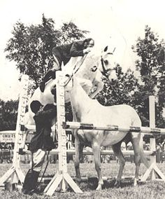 Snowman, a plow horse who was rescued from an auction for 80 dollars,  went on to become a famous showjumper, and was eventually inducted into the showjumping hall of fame!