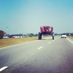Pitt County, North Carolina. August 2012. Copyright © 2012 Jacqui Barrineau