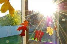 Saving the colors of fall. #diy #fall #leaves