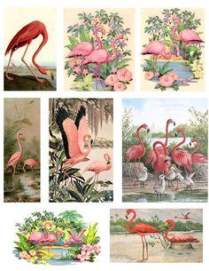 Pink Flamingos Digital Collage Sheet