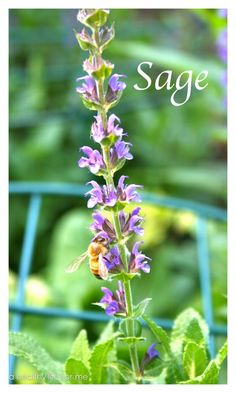 Growing Herbs For Your Health. How to grow and why.