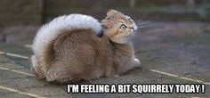 Feeling Squirrely!