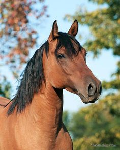 bay quarter horses, beauti hors, googl search, anim, bay hors, hors geld, hors thing, quarterhors, equin