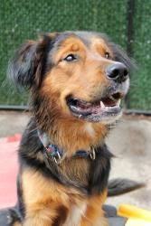 Buddy #3 is an adoptable Golden Retriever Dog in Brockton, MA. ***GETTING READY FOR ADOPTION*** Buddy is just over a year old and playful as can be! He is very high energy, friendly, and loves people....Please click on pic for additional info on this dog