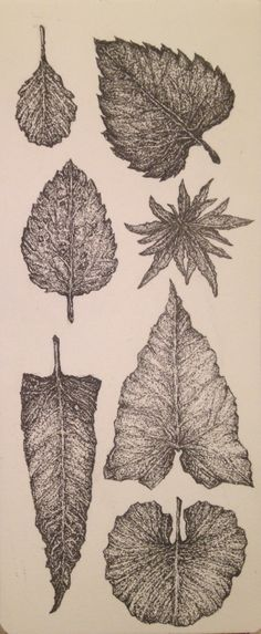 Botanical sketchbook studies by Amber Cross https://www.behance.net/amberjcross  #botany #leaves #leaf #nature #studies #sketchbook #drawing #art #sketch #penandink #pen #ink #blackandwhite #moleskin #detail #stippling #pointalism #dandelion #rose #columbine #flora #patterndesign #pattern #patterns #botanicalillustration #botanicaldrawing #scientificillustration