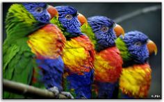 80+ Rainbow Colors Inspired Photos and Pictures   Inspiration   instantShift - Web Design Magazine