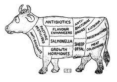 healthi meat, animals, cow meat, anim health, veganvegetarian cow, healthy meats, eat cow, vegetarian foods, cow illustr