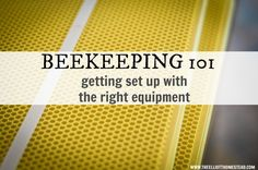 Beekeeping 101: Getting the Right Equipment