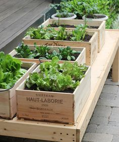 Small Space Gardening – How to Grow a Garden in Containers. From jenniferskitchen.com.