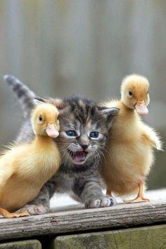 ^Popular kitten indeed