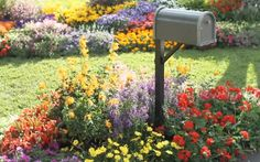 Create fast, easy, and inexpensive curb appeal by planting a new mailbox garden.