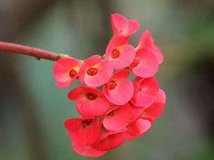 Beautiful Wondrous Flowers