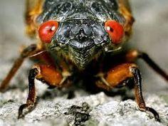 ▶ Return of the Cicadas 2013 - YouTube