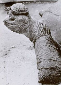Turtle on Tortoise: Chilling