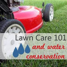 Lawn Care 101 and Water Conservation