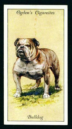 Cigarette Card - Bulldog 1936.