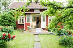 Idyllisk röd stuga med pioner och blåklint i trädgården.