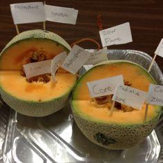 Parts of a sun lesson using cantaloupe