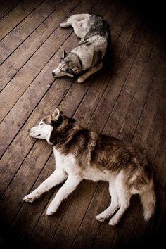 Sleepy puppies.