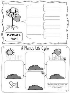 Life Cycle of Plants graphic organizers