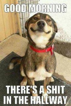 anim, laugh, dogs, funni, humor