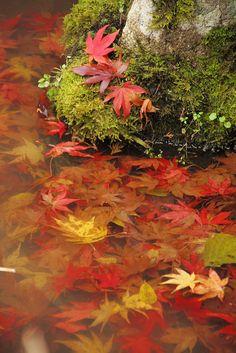 ✯ Autumn at The Lake