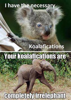 your koalafications are irrelephant