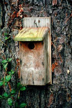 Old bird house