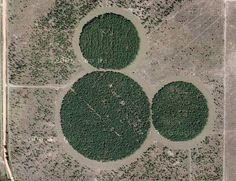 Hidden Mickey on Google Maps - About 20 miles from Walt Disney World, just off the 27-HWY exists what must be one of the world's largest Hidden Mickeys. Since this is in Florida, I imagine these are orange trees. But it's hard to tell for sure.