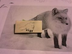 Scrimshaw of Fox in Snow in progress on alternative ivory. Photo credit: Rob Lee on Flickr.com