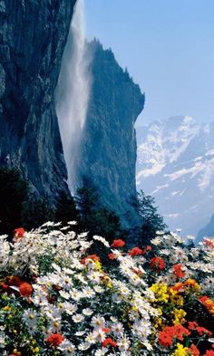 Spring Flowers ~ Switzerland spring flower, beautiful earth, waterfalls, switzerland, staubbach falls, beauty in nature, travel, place, flowers