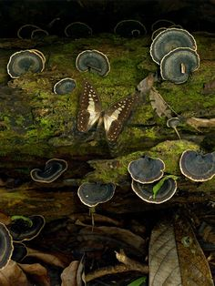 Mushrooms and a butterfly living in the forest