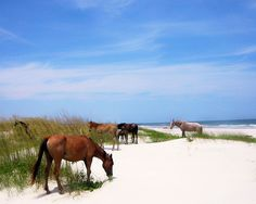 Cumberland Island, GA  we had such a wonderful day there!!