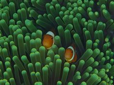 Underwater Art and Photography by David Benz and Melanie Schuler