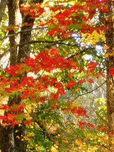 Pocono Fall Foliage 2012