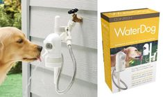 contech water dog automatic pet fountain! cool!