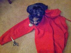 CindyLu'sMuse: No-Sew Dog Coat