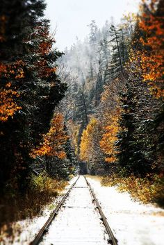 winter tracks in snow through woods