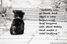 Dogs are the most reslient creatures of us all. #newbeginning #nmdr #rescue #itsanewday