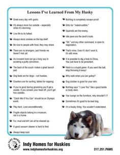 """""""Lessons i've learned from my Husky"""""""