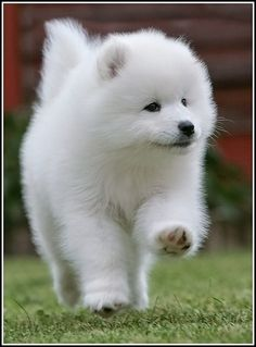 PUPPIES! powder puff, balls, animals, polka dots, old dogs, cutest dogs, happy puppy, puppi dog, fluffy puppies