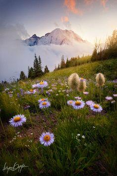 Summer sunset and Wildflowers, Mount Rainier National Park, Washington